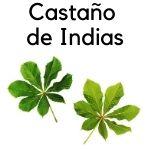planta medicinal castaño de indias