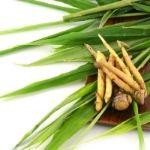 ginseng planta medicinal