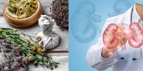 plantas medicinales para el riñon